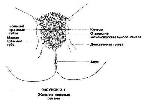 головка клитора: