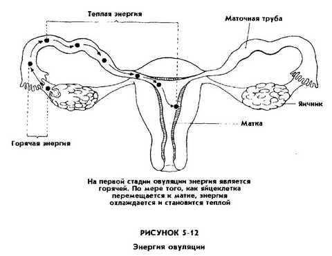 Накопление сексуальной энергии мантек чиа