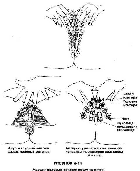 Половые органы женские оргазм