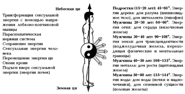 Сексуальная энергия мужчины в разном возрасте